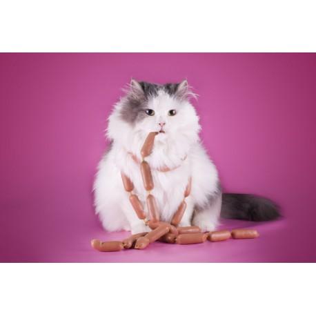 catapart.fr propose des conseils pour régler les problèmes d'obésité du chat